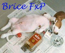 BriceFxP