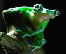 Froggywentacortn